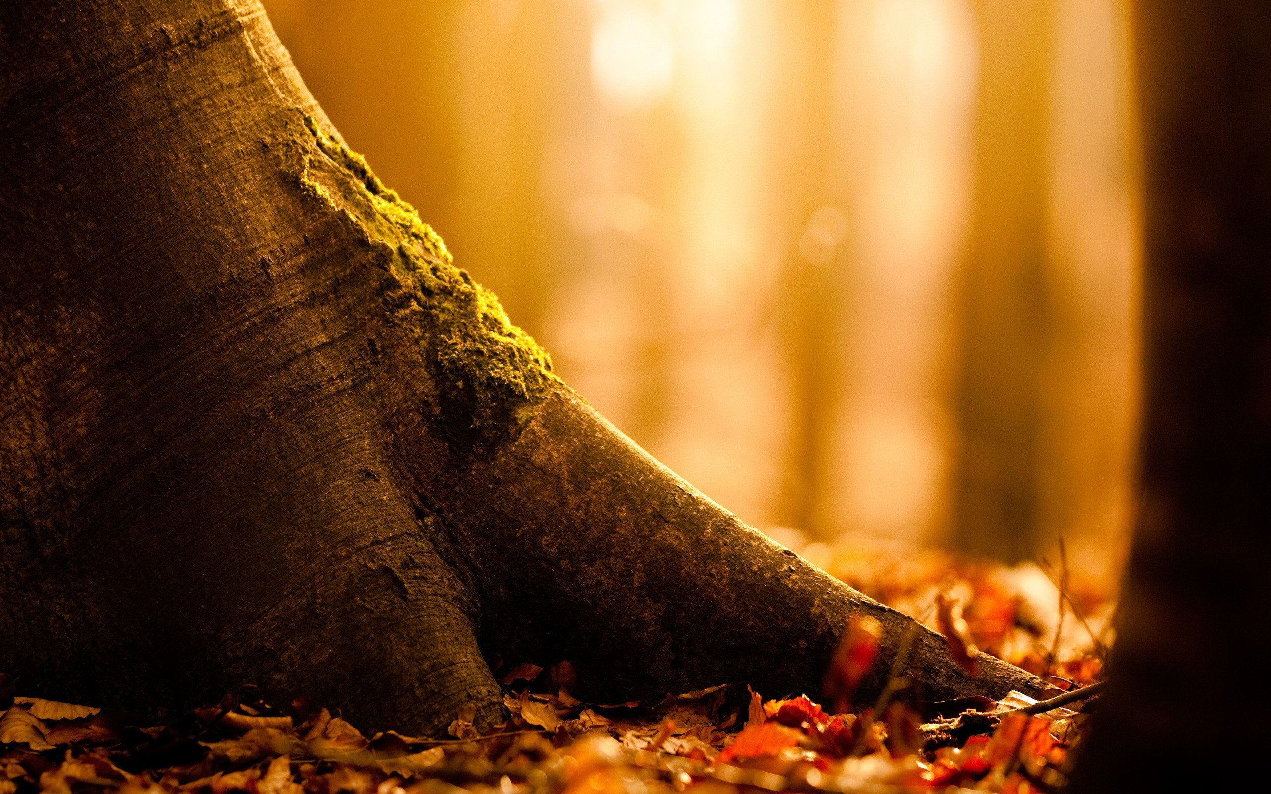 Autumnal_tree_roots_2560x1600